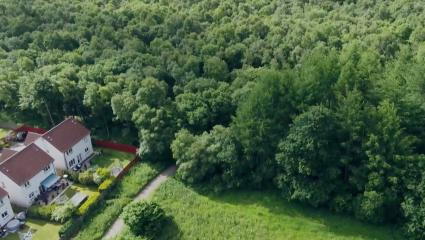 Dundee woodland