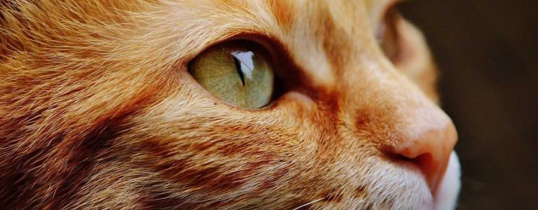 In the last five years, over five hundred domestic cats have gone missing only to be later found dead and dismembered